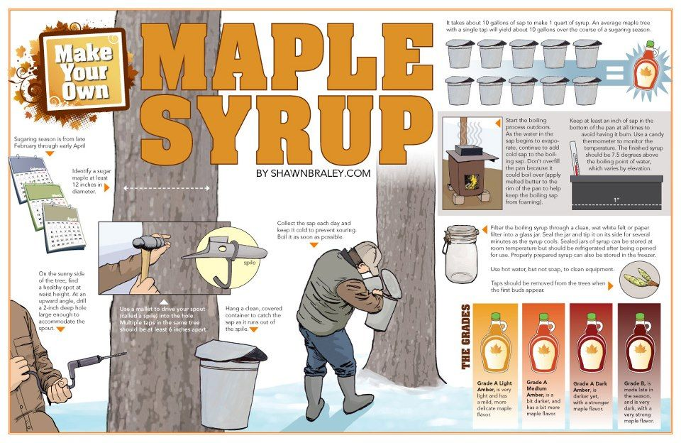 How To Make Maple Syrup Bout That Time To Tap Some Trees Maple Syrup Taps Syrup Maple Syrup Sugaring
