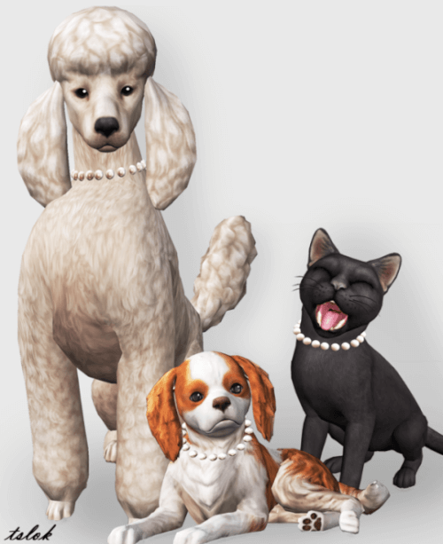 What Mods Don T Work Sims  Cats And Dogs