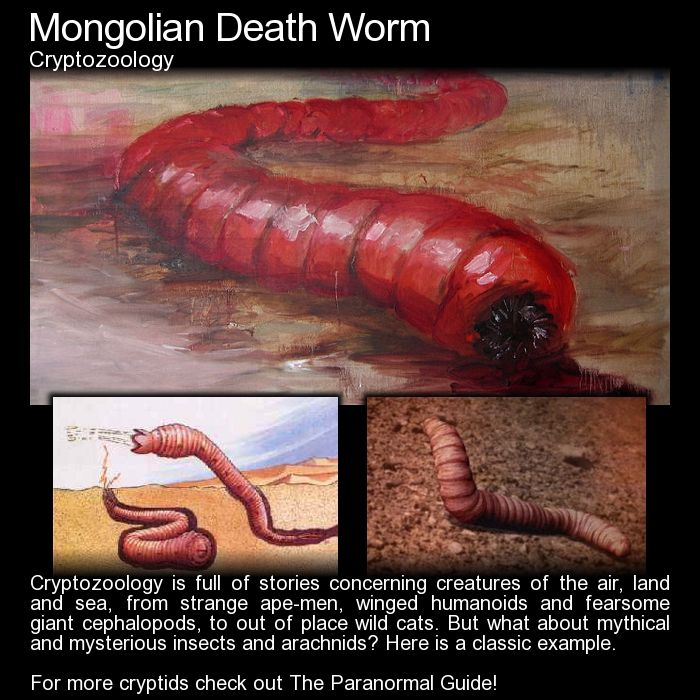 Mongolian Death Worm Lost Tapes