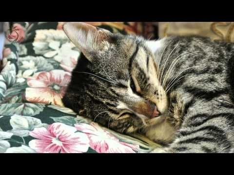 Purring Cat Sound For Relaxation Cats Purr Sounds Fireplace Crackling Purring Cat Cat Purr Cats And Kittens
