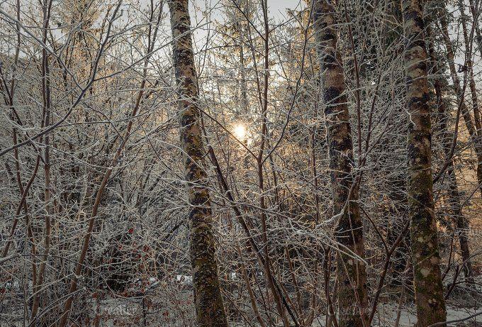 dark winter forest photos dark winter forest by dreamy pixel stock