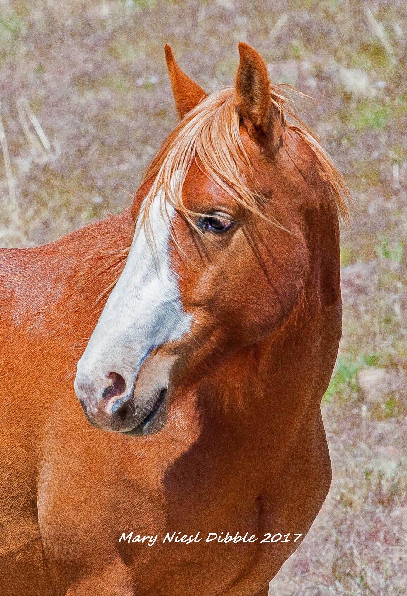 Pin by Mary Dibble on Virginia Range Wild Horses Horses