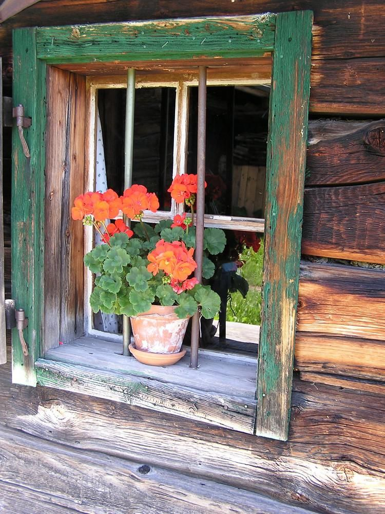 Jack and gill store rimini bch italy windows flores na janela janelas e porta janela - Finestre d epoca ...
