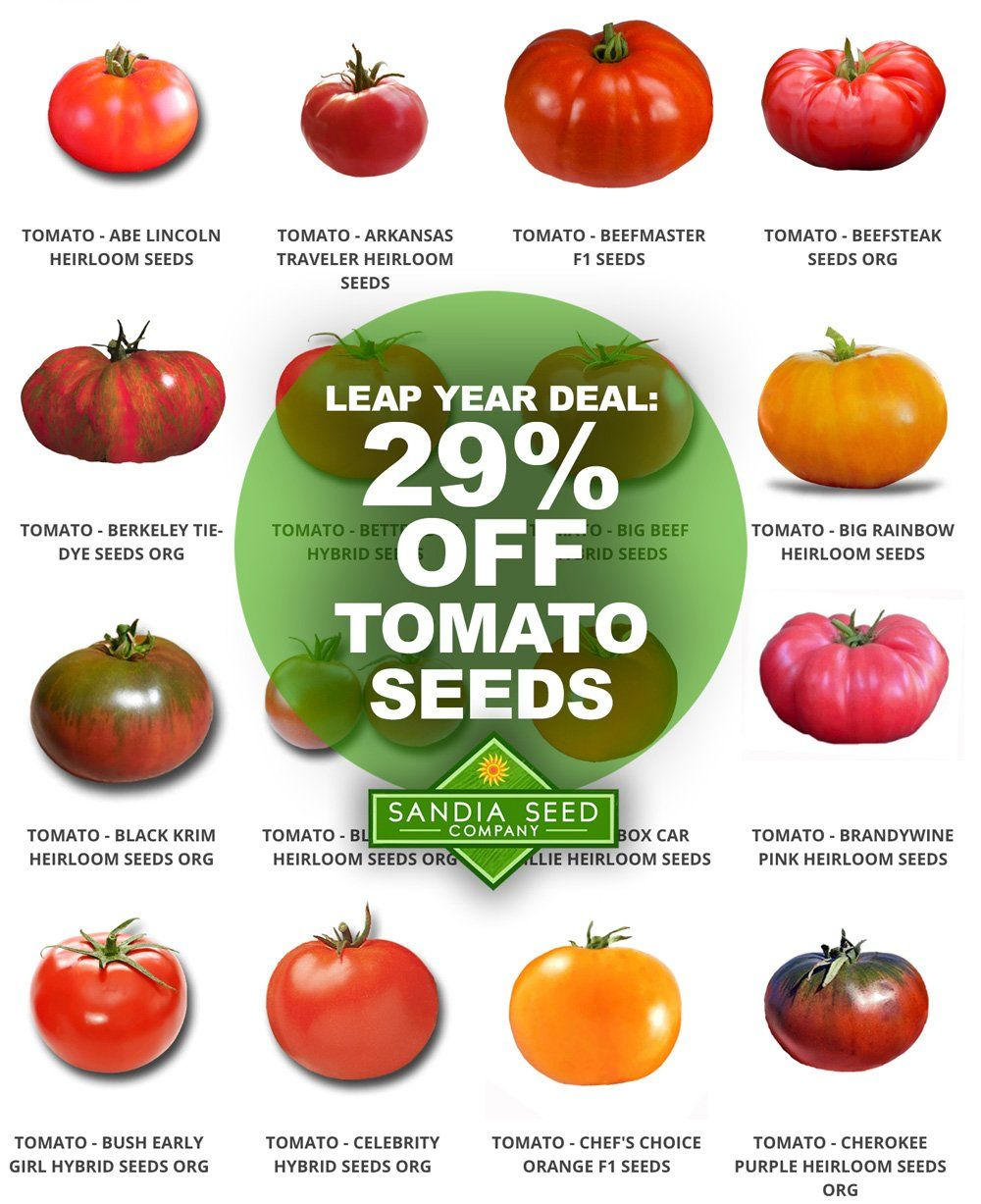 Best heirloom tomato seeds on sale for leap year in 2020