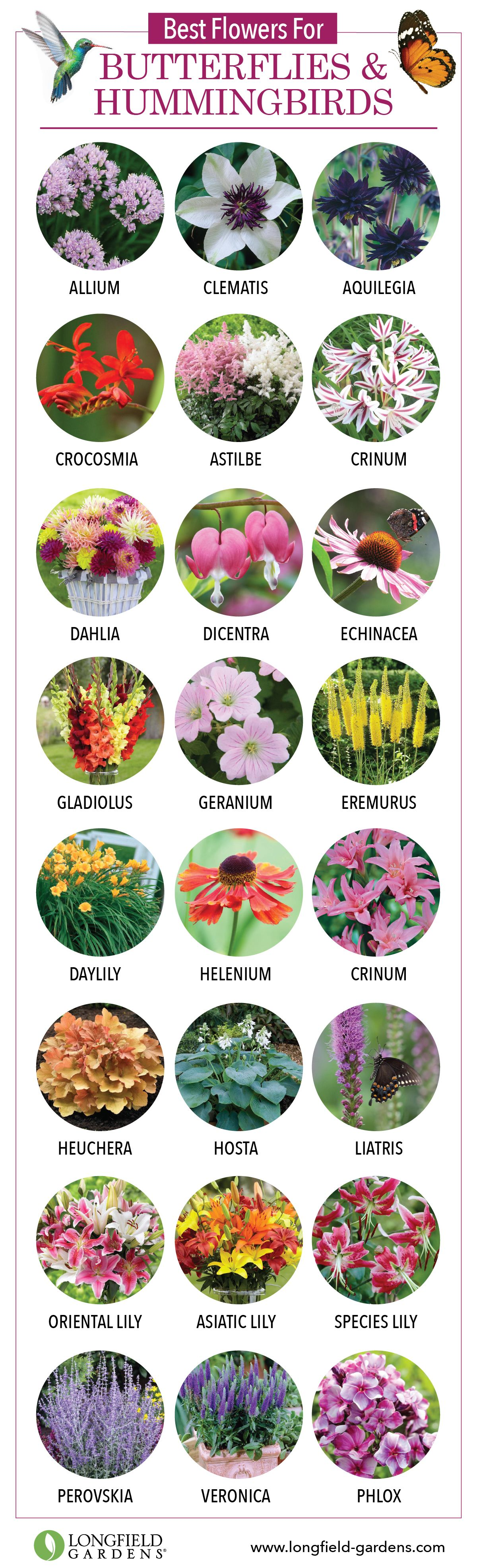 Best Flowers For Butterflies And Hummingbirds Bees Birds And
