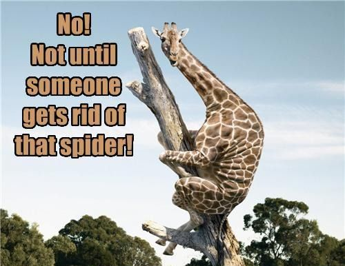 I'm with you, Giraffe!