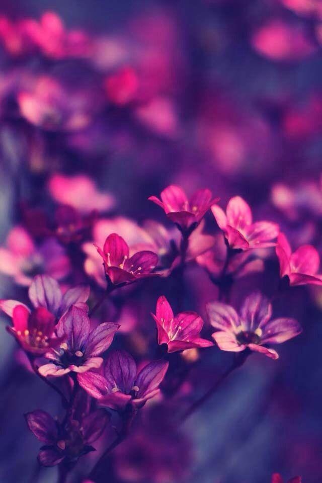 Florecitas