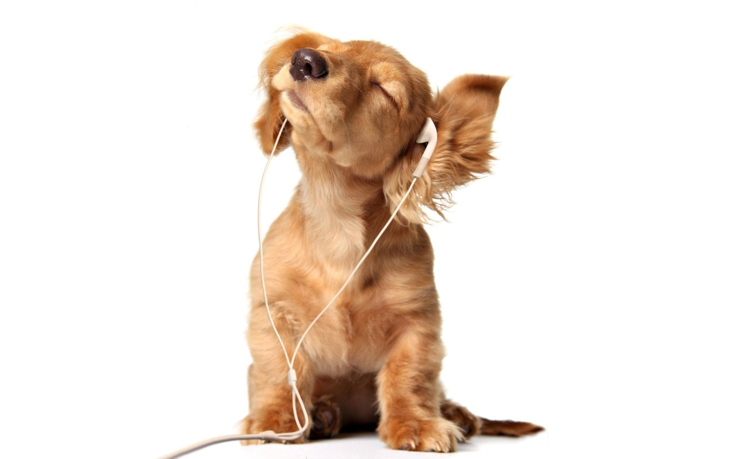 Sweet Puppy Listening To Music With Headphones 1920x1080 Http