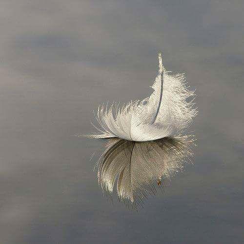 <3 #piuma #feather