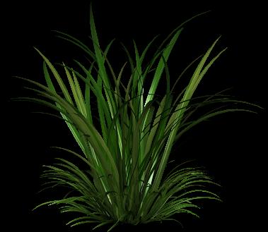 Tall Grass Png Images Pictures Plants Garden Illustration Landscape Elements