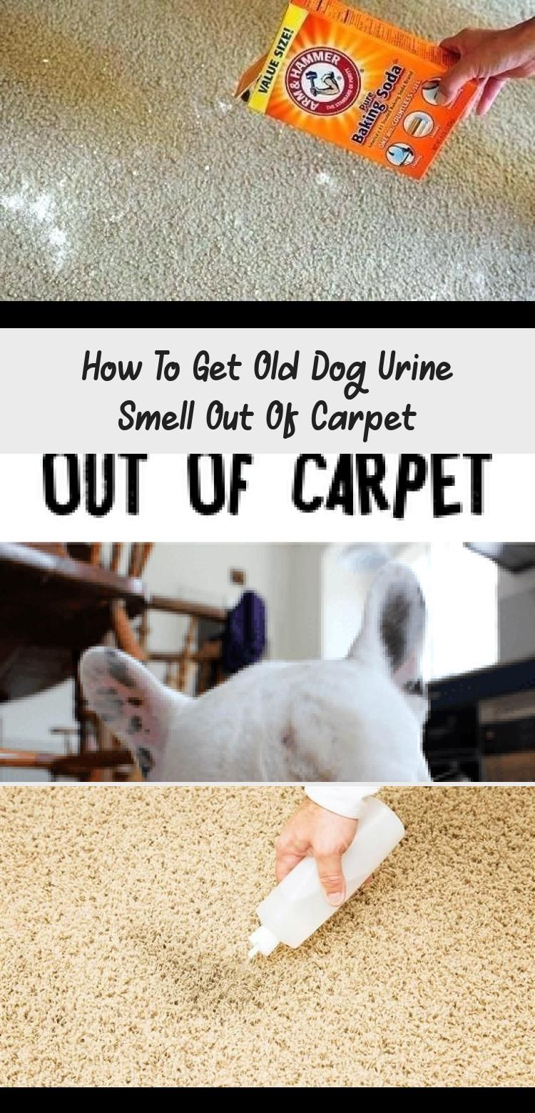 How to Get Old Dog Pee Smell Out of Carpet. Whole house