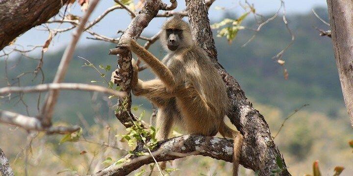 Northeastern Tanzania