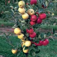 Multi Grafted Fruit Trees Good For A Small Space Garden Because 1 Tree Is Self Pollinating Fruit Trees Apple Tree Berry Plants