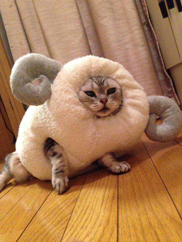 Twitterへようこそ ログインまたは新規登録 可愛すぎる動物 おかしな動物 おもしろ猫画像