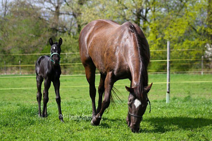 Horse #Horse #horses #animals #animal #nature #photo #photography #fliiby #images #yyazilim #people #nature