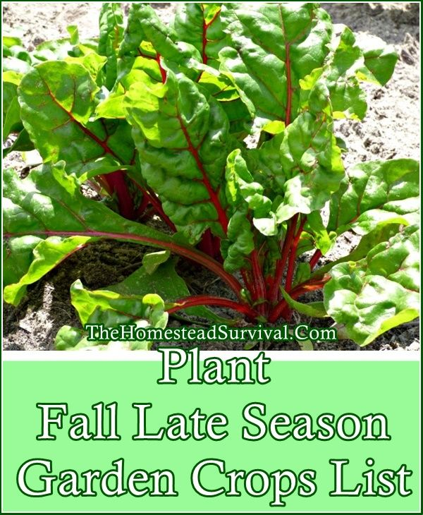 Plant Fall Late Season Vegetable Garden Crops List