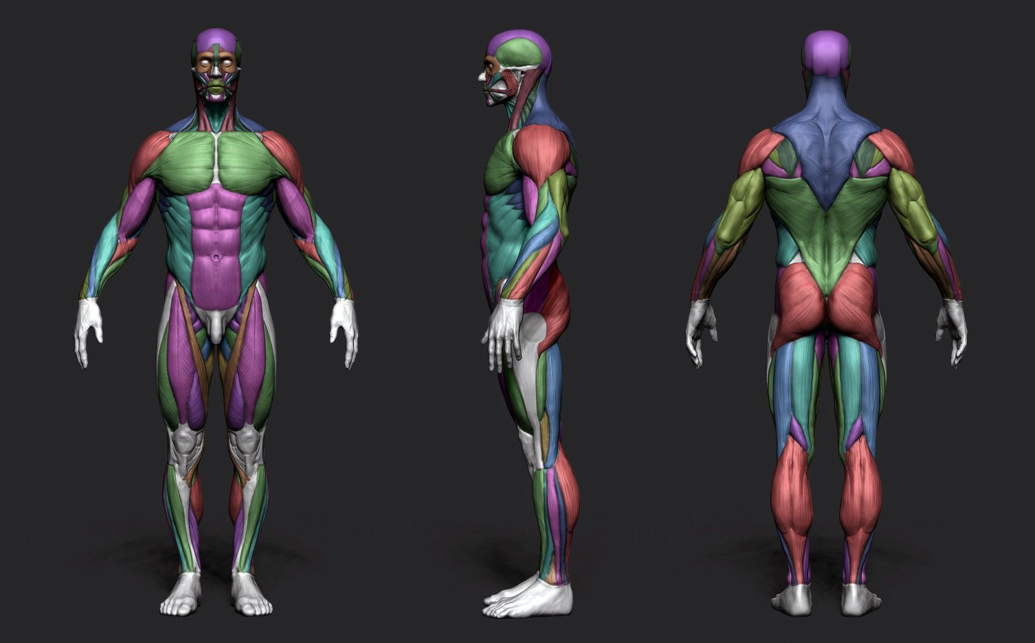 Artstation Anatomy Male Tool Reference For Artists Pascal
