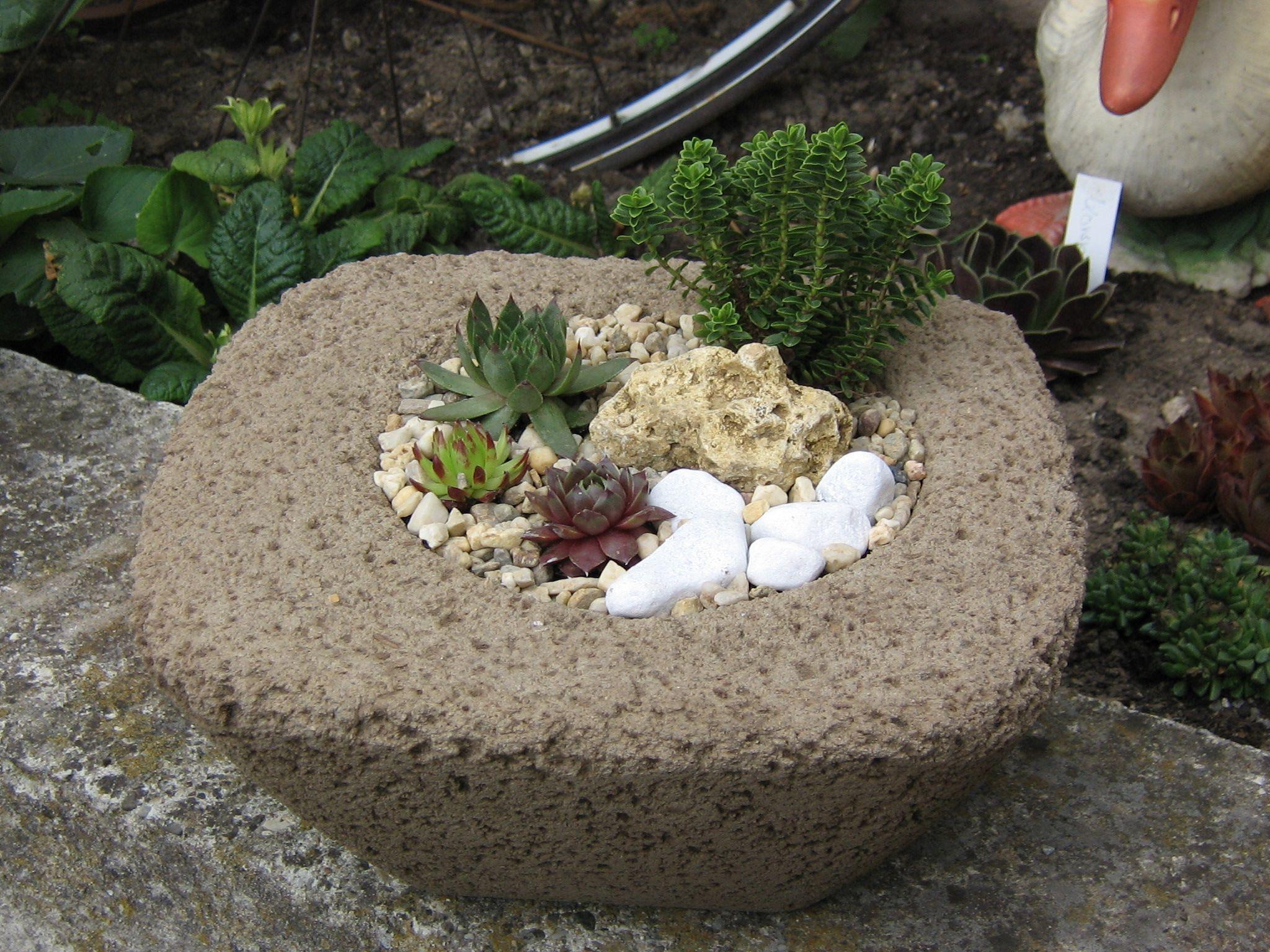 tr gle pflanzschale aus beton hypertufa garten pflanzen garten und gartenweg. Black Bedroom Furniture Sets. Home Design Ideas