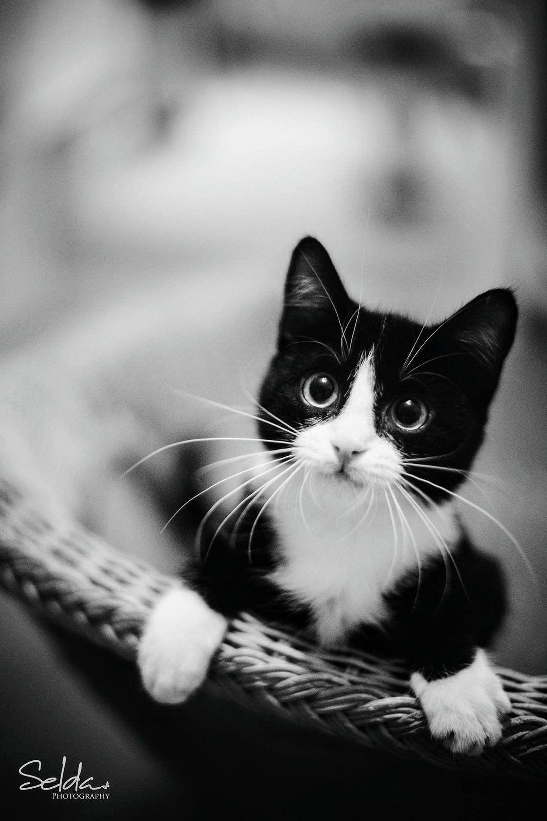 Ahhhhhhh! Animais de estimação, Gatos frajola