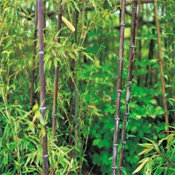 How To Get Rid Of Bamboo How To Get Rid Of Stuff Bamboo Backyard Landscaping Backyard House
