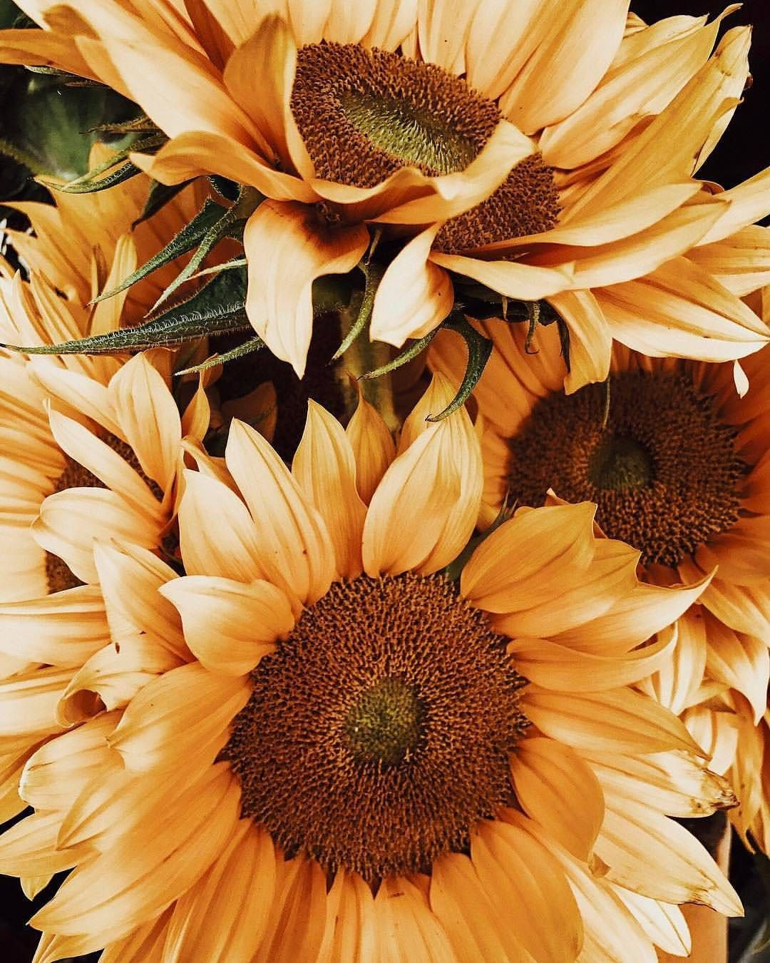 Pin by mna on flwers pinterest sunflowers flowers