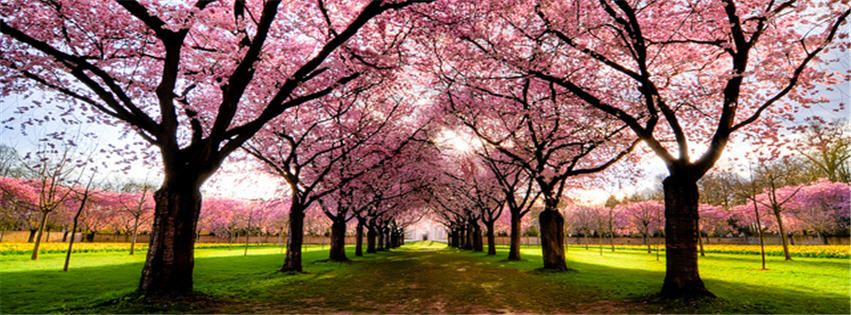 Beautiful Nature Wallpapers With Quotes For Facebook Cover Page Tree Photography Beautiful Tree Blossom Trees