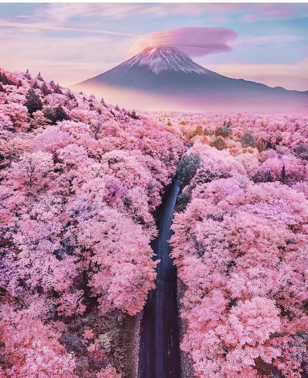 Cherry Blossom Road Cherry Blossom Japan Beautiful Nature Beautiful Landscapes