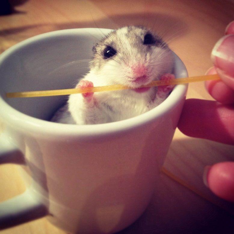Hamster loves spaghetti...