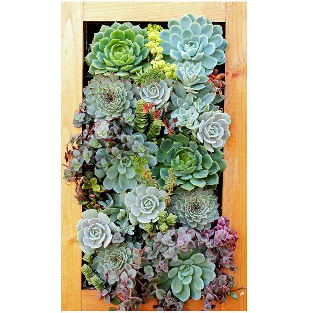 Supermoss Living Frame 14 X 24 Succulents Garden Succulent Frame Hanging Plants Diy
