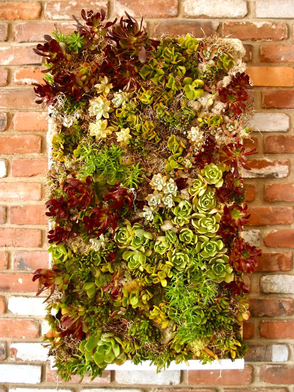 Make your own vertical Succulent Box | good ideas | Pinterest ...