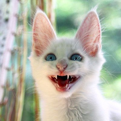 Fine Art Photography Print Smiling Cat Kitten Red By Photoechoes 25 00 Chat Chat Blanc