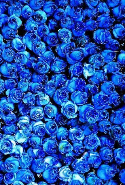 flowers blue inspiration blue aesthetic blue roses