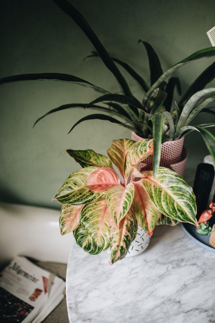 Zu Besuch Bei Mike Klar Design Pflanzen Gute Frage