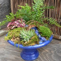 Miniature garden in a bowl!  Why didn't I think of this?