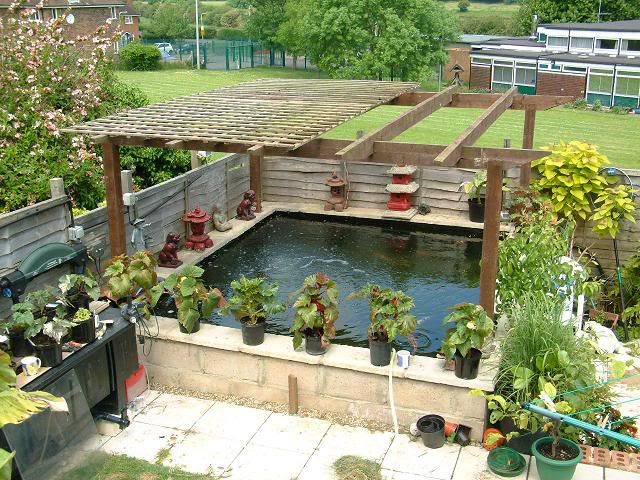 Pergola over the pond to deter herons and add a bit of for Carp pond design