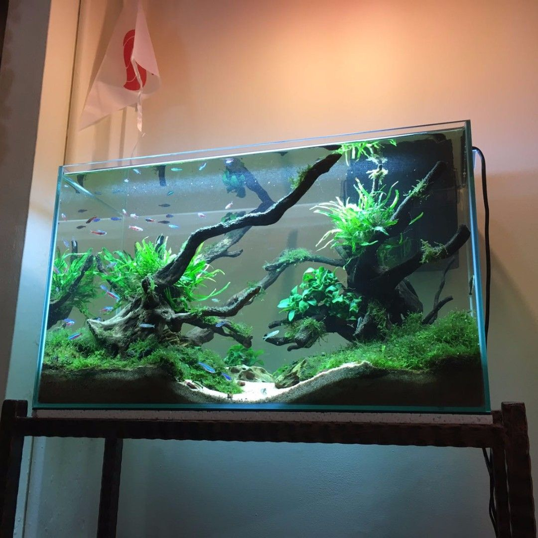 Aquascape/Low Maintenance Fish Tank on Carousell ...