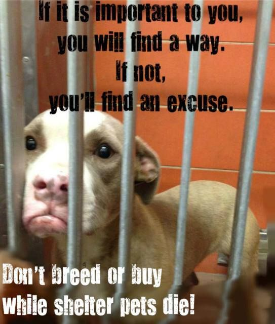 Don't breed or buy! MILLIONS of animals are euthanized ...