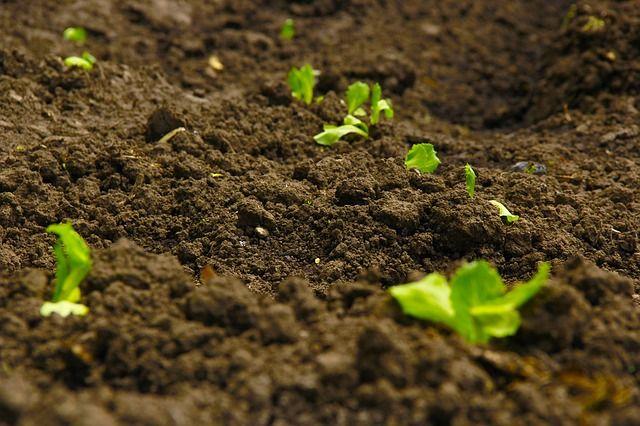 Soil Health Garden Soil Organic Vegetable Garden Organic Pesticide