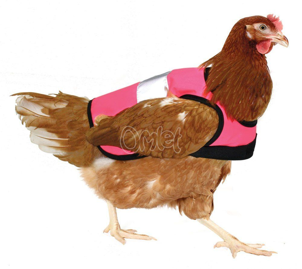 Warnweste für Hühner - Pink: Amazon.de: Haustier Meraviglioso!!!!!