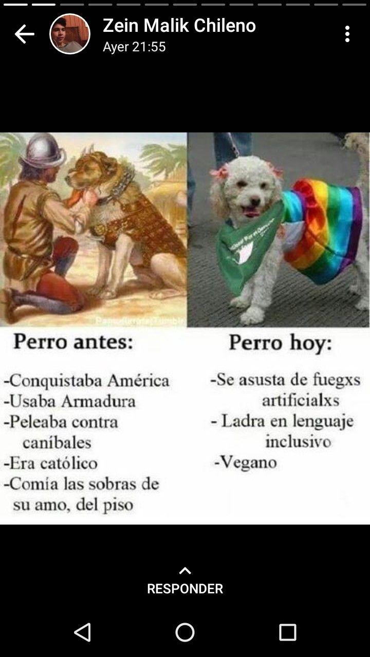 Jajaja Hasta Los Perros Han Cambiado Memes Divertidos Memes Feministas Gatitos Divertidos