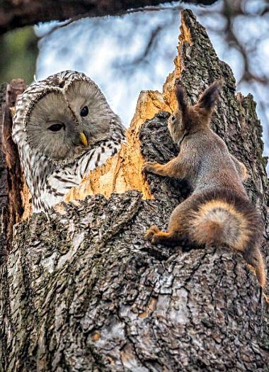 scoiattolo e gufo