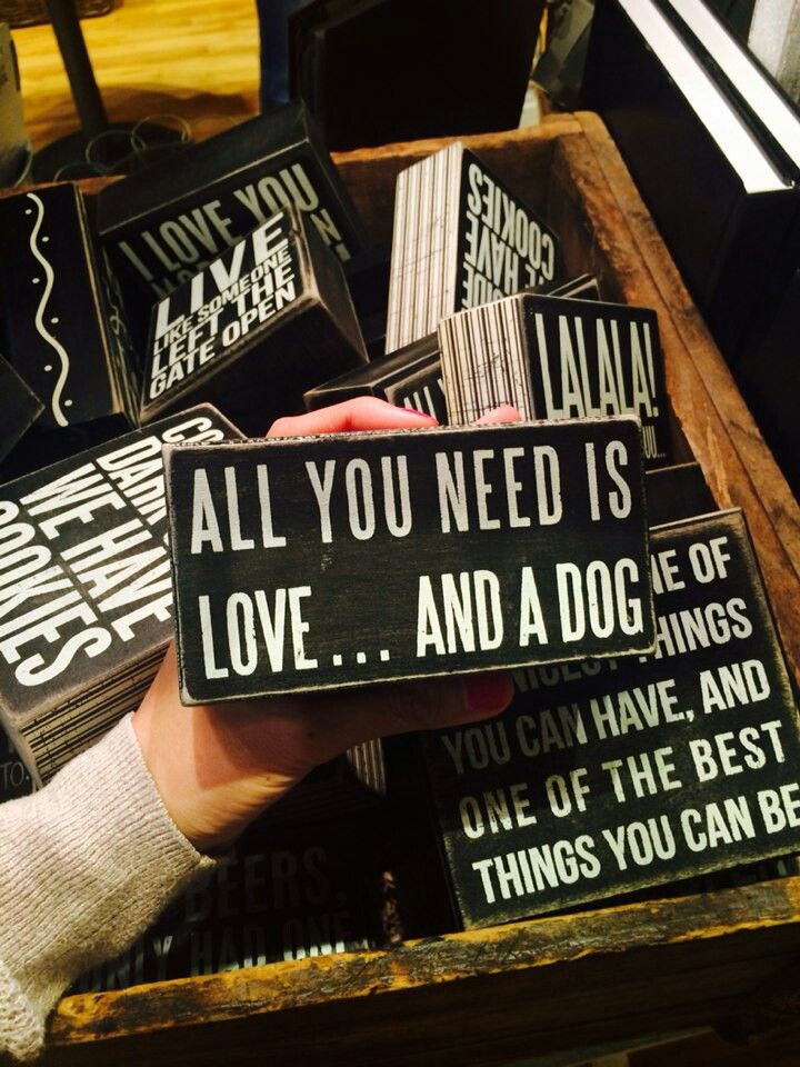 All you need is a dog... ♡