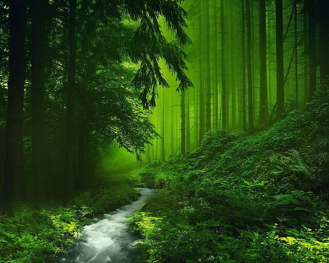 wallpaper download 1280x1024 a clear river in the green forest