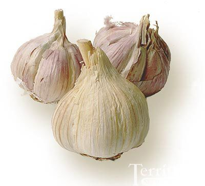 Bavarian Red Garlic - After eating half of a clove, this taste tester found the heat to build quickly to a volcanic state, made the eyes water, then disappeared just as fast with no aftertaste-almost like that flash you get when eating fresh horseradish.