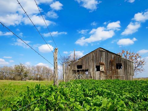 Old barn in all its glory. Photo by Julie Vrazel Tomascik