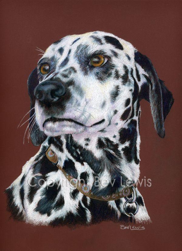 Dalmatian Dog Coloured Pencil Private Commission Dog