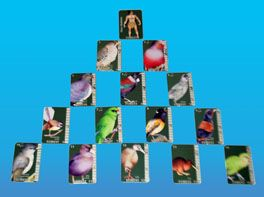 A completed CLOAK of forest birds in the New Zealand birds & predators card game CLOAK OF PROTECTION