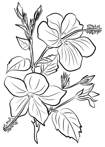 Hibiscus Coloring Page From Hibiscus Category Select From 29179