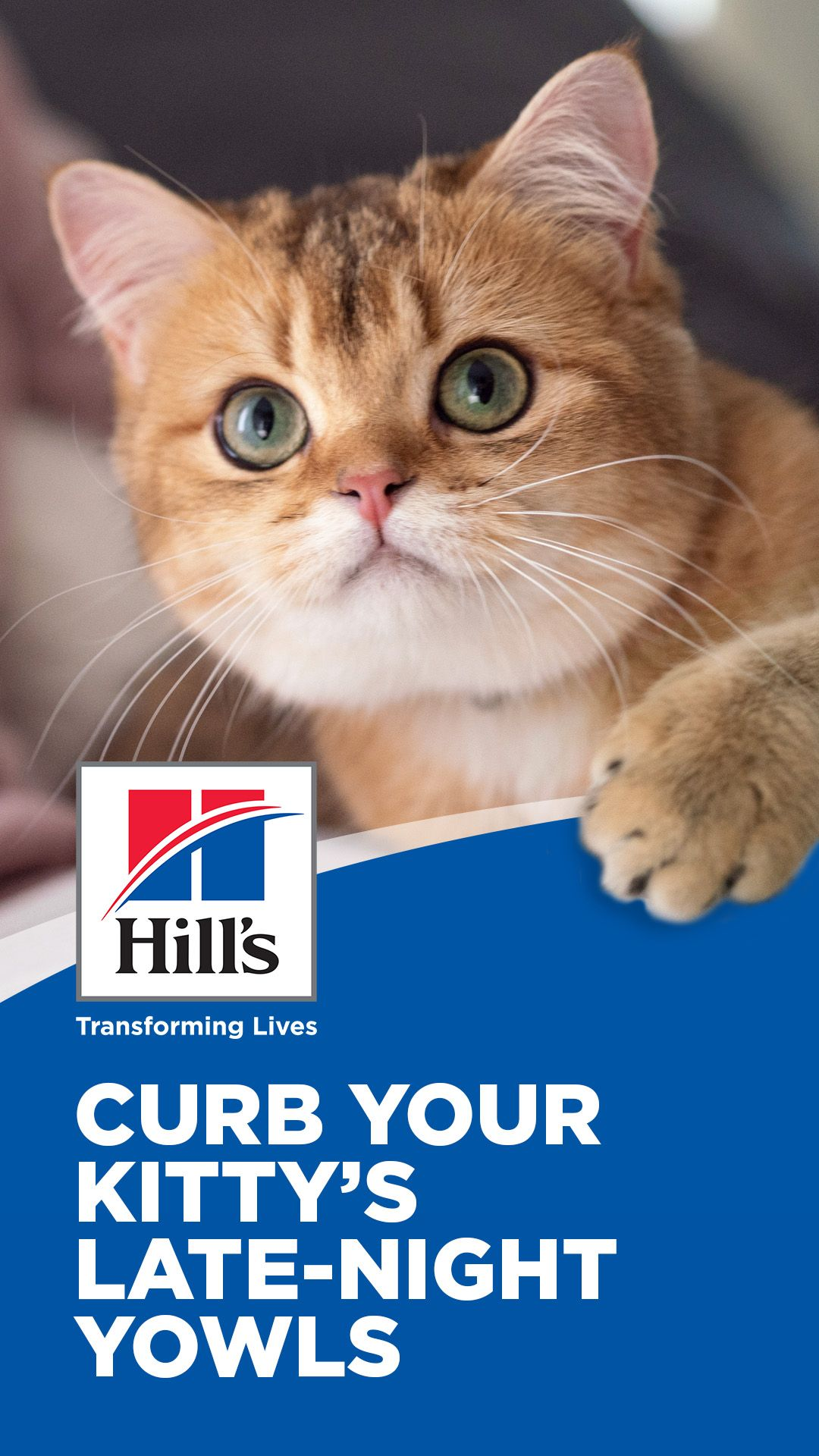 Why Does My Cat Yowl At Night Hill S Pet In 2020 Cat Yowling Cats Cat Care