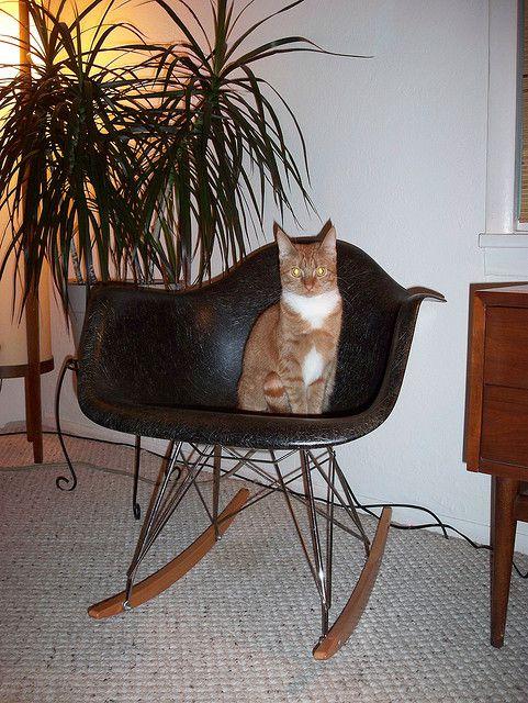 21 katter (och 2 hundar) som älskar Eames - Sköna hem